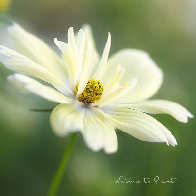 Natürlich schöne Blumenbilder nach Blütenfarbe sortiert