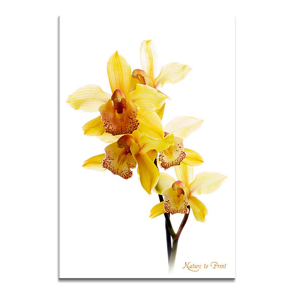 blumenbild auf leinwand oder kunstdruck gelber orchidee. Black Bedroom Furniture Sets. Home Design Ideas