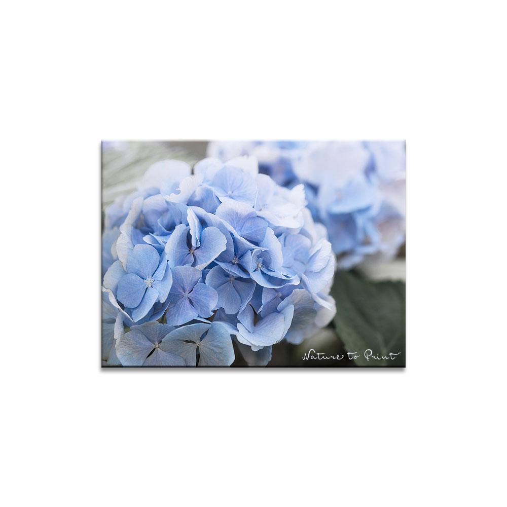 blumenbild auf leinwandbild im keilrahmen mit blauer. Black Bedroom Furniture Sets. Home Design Ideas