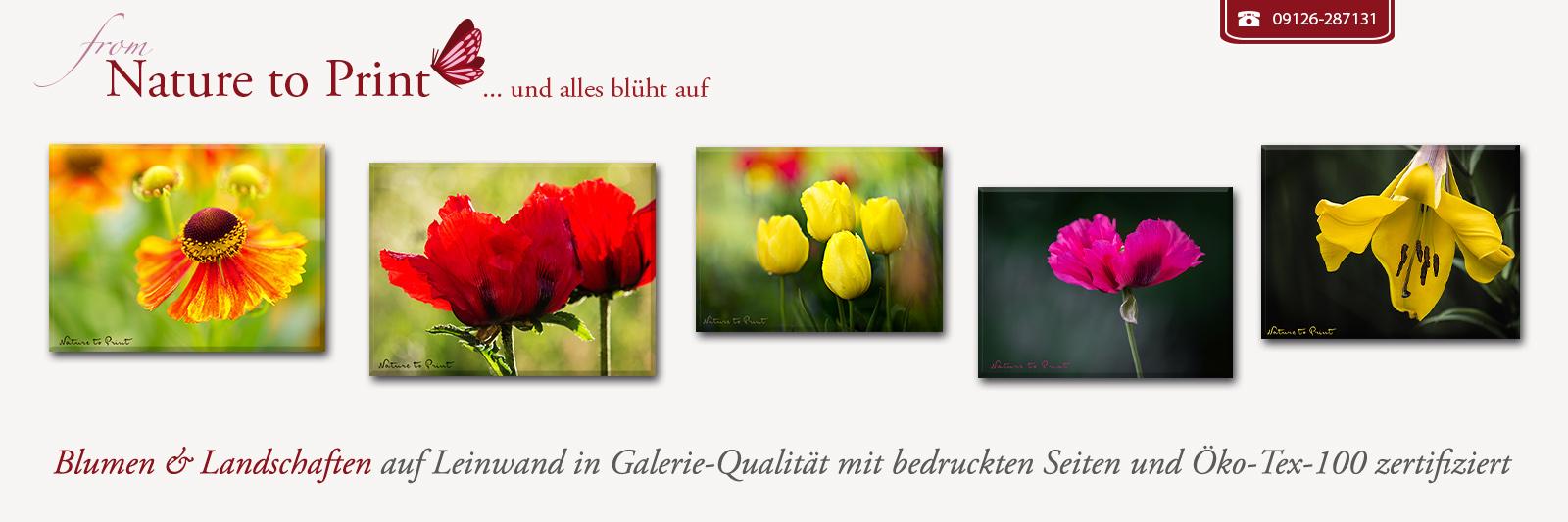 Postereck 3490 Tulpen Blume Blüte Deko Pflanze Knospe Flora Poster /& Leinwand
