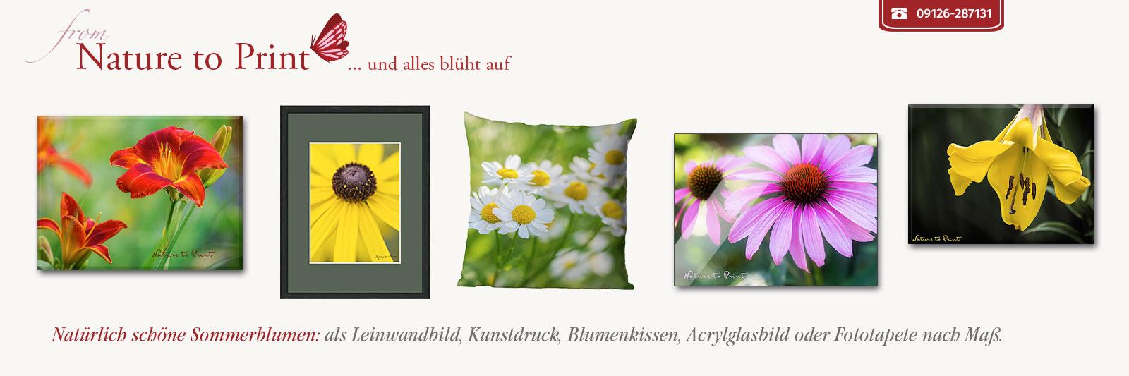 Blumenbilder, Gerahmte Kunstdrucke und Leinwandbilder mit Sommerblumen