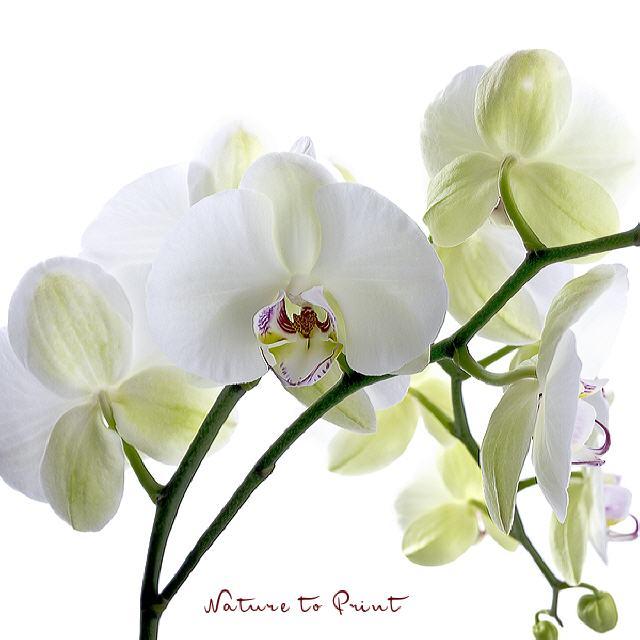 Natürlich schöne Blumenbilder: Kunstdruck, Leinwand, Sofakissen