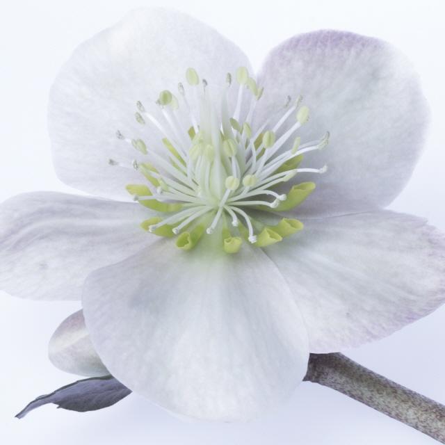 Leinwandbilder und Kunstdrucke mit fröhlich bunten Frühlingsblumen