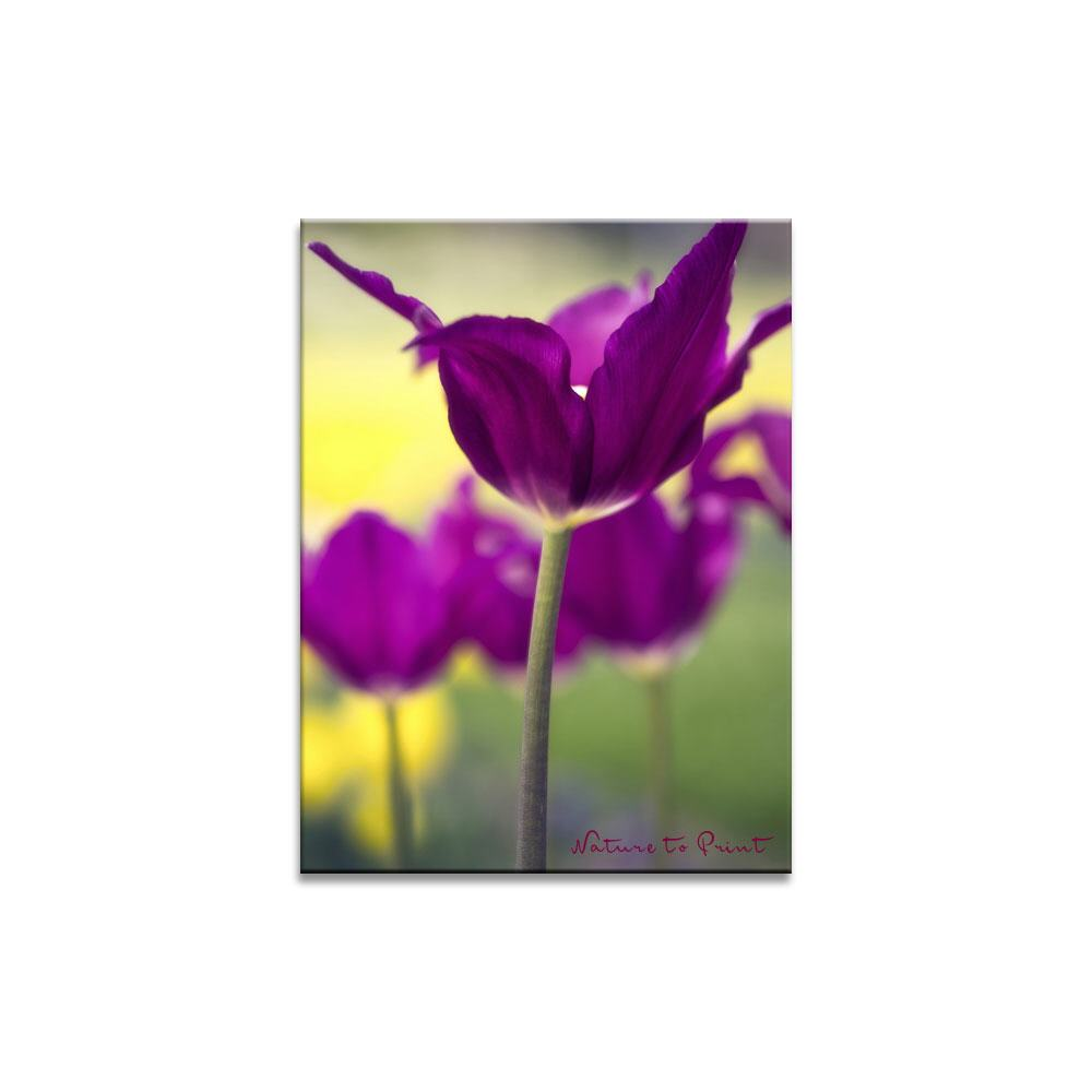 Purple Dream in Motion |  | Blumenbild auf Leinwand, Kunstdruck, FineArt, Acrylglas, Alu, Fototapete, Kissen