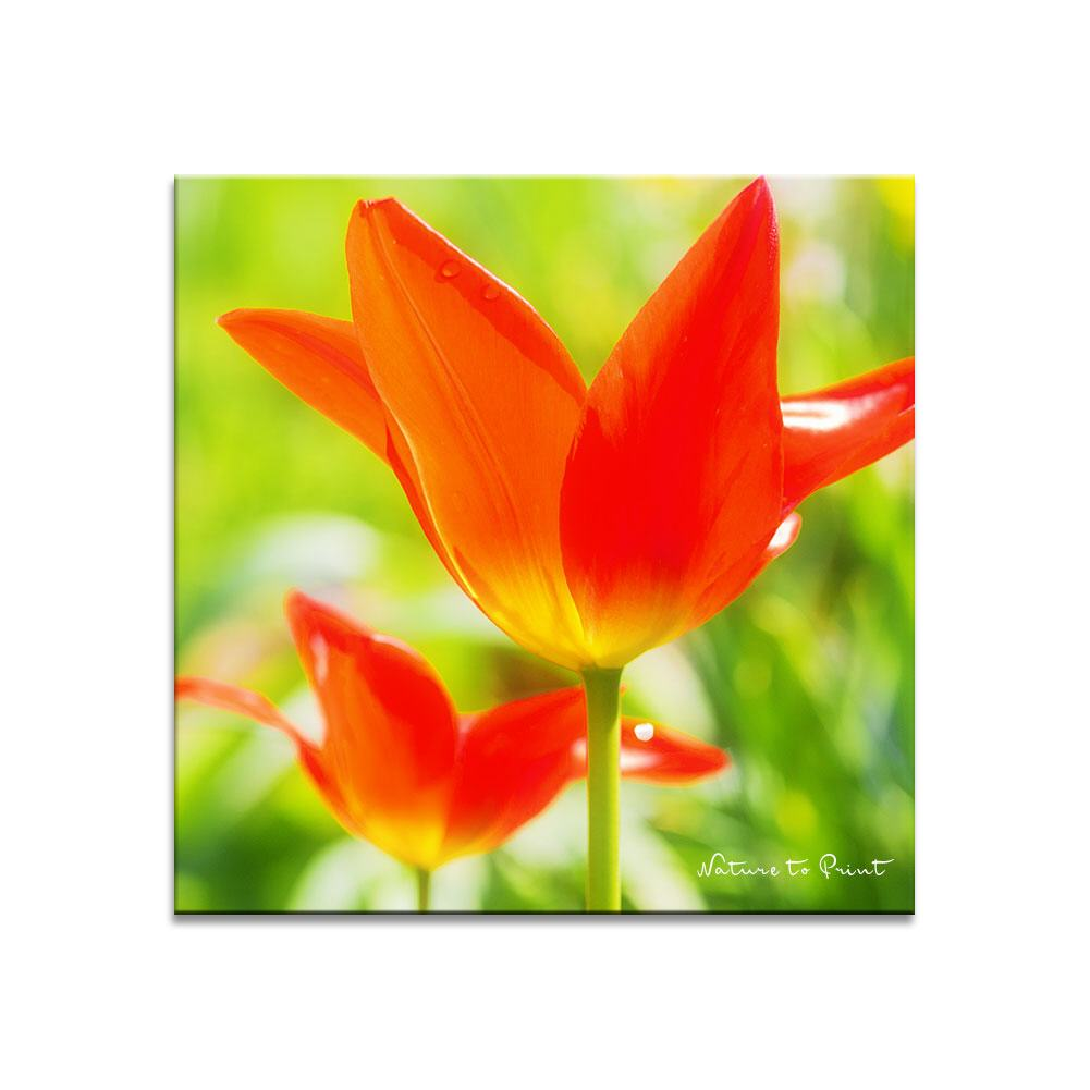 Quadratisches Leinwandbild Wilde Tulpen in Orange