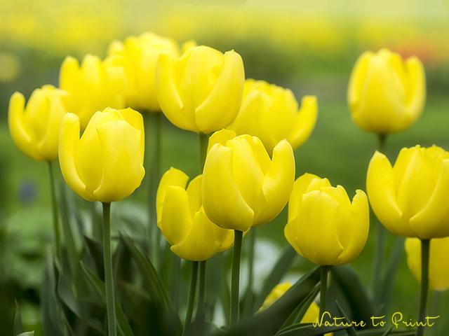 Blumenbild Ausdauernde Lichtträger.