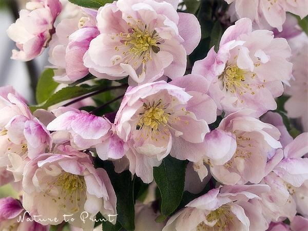 Blumenbilder, gerahmte Kunstdrucke und Leinwandbilder mit rosa Blüten